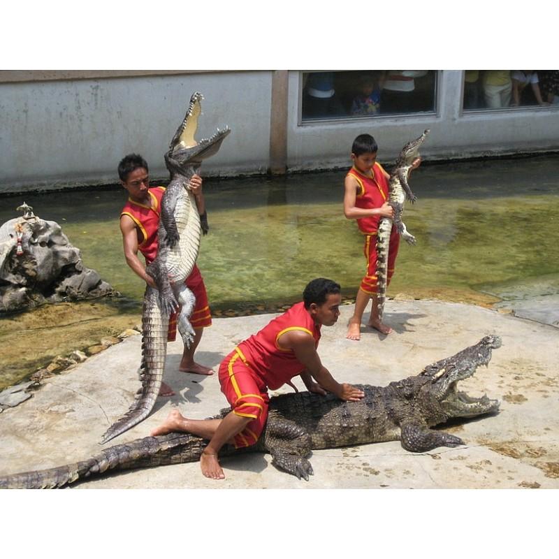 Крокодиловая ферма в Таиланде