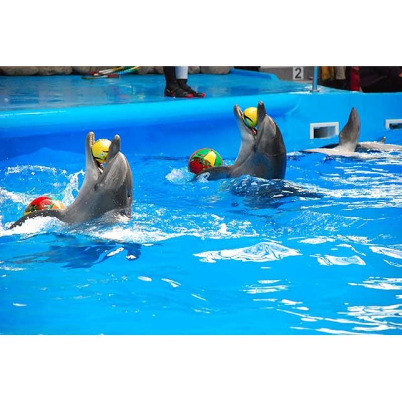 Аквапарк и дельфинарий на Пхукете - фото 3 - 001.by