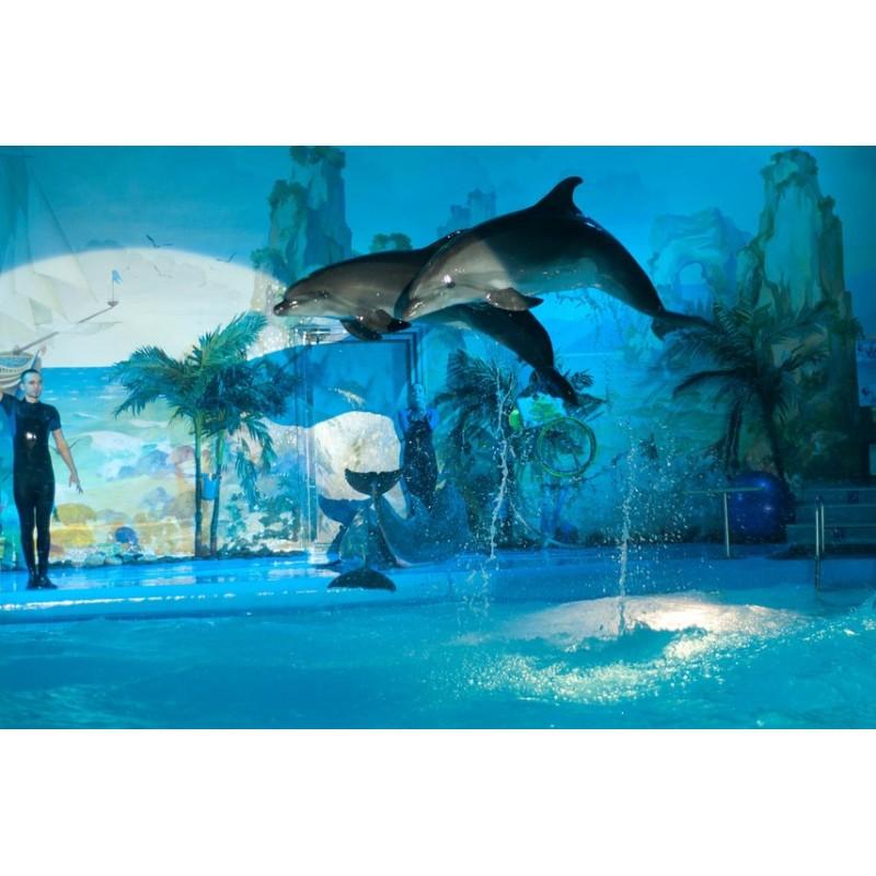 Аквапарк и дельфинарий на Пхукете - фото 4 - 001.by