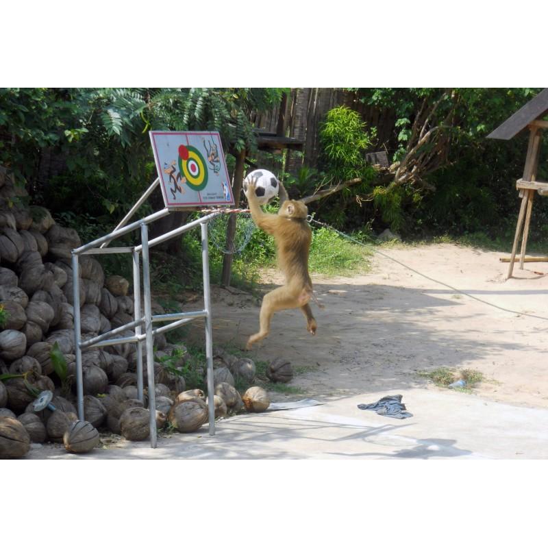 Экскурсия по острову Самуи  - фото 4 - 001.by
