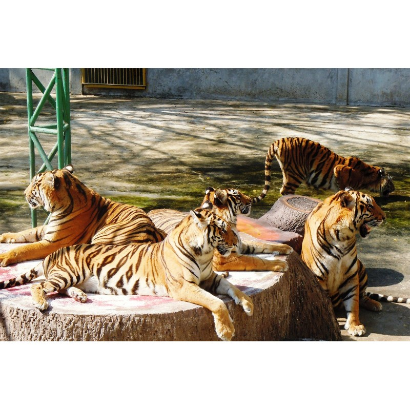 Экскурсия в тигровый зоопарк и аквариум