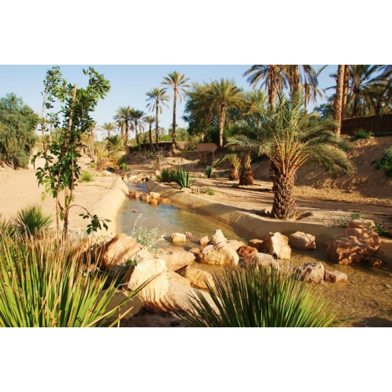 Экскурсия в Сахару - фото 2 - 001.by