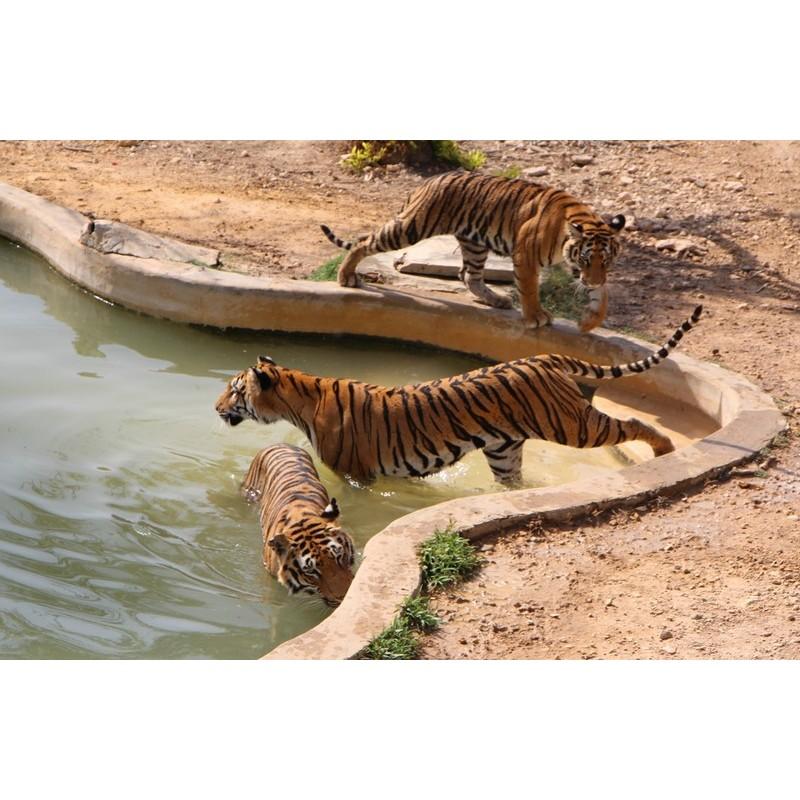 Сафари в парке Фригия - фото 4 - 001.by