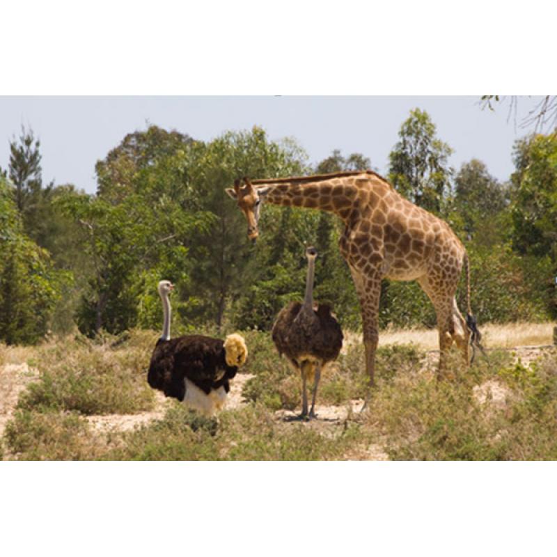 Сафари-парк Фригия - фото 1 - 001.by